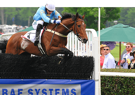 What is a Steeplechase horse?